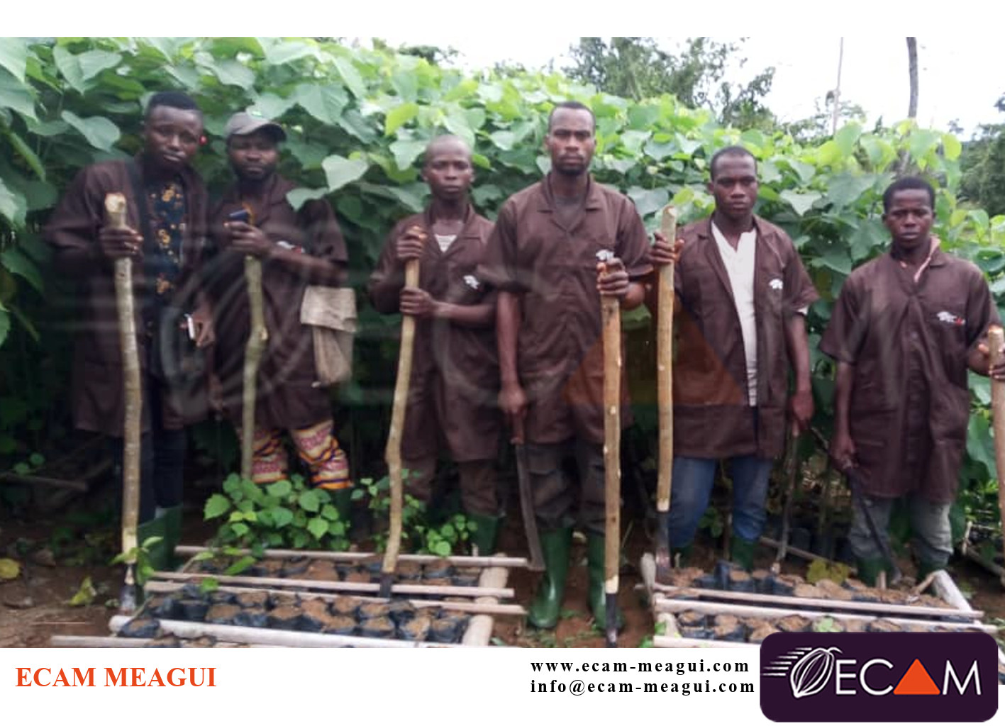 Agro foresterie