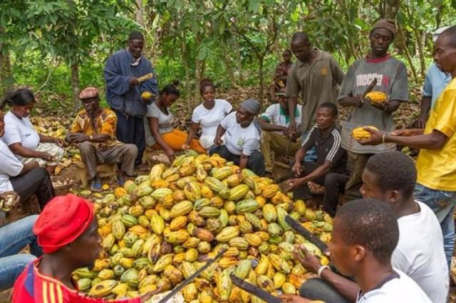 Documentaire ECAM - un cacao équitable